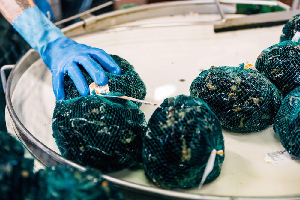 Processo di confezionamento cozza | Finittica: lavorazione e vendita di molluschi bivalvi vivi