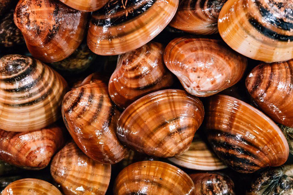 Fasolari | Finittica: lavorazione e vendita di molluschi bivalvi vivi