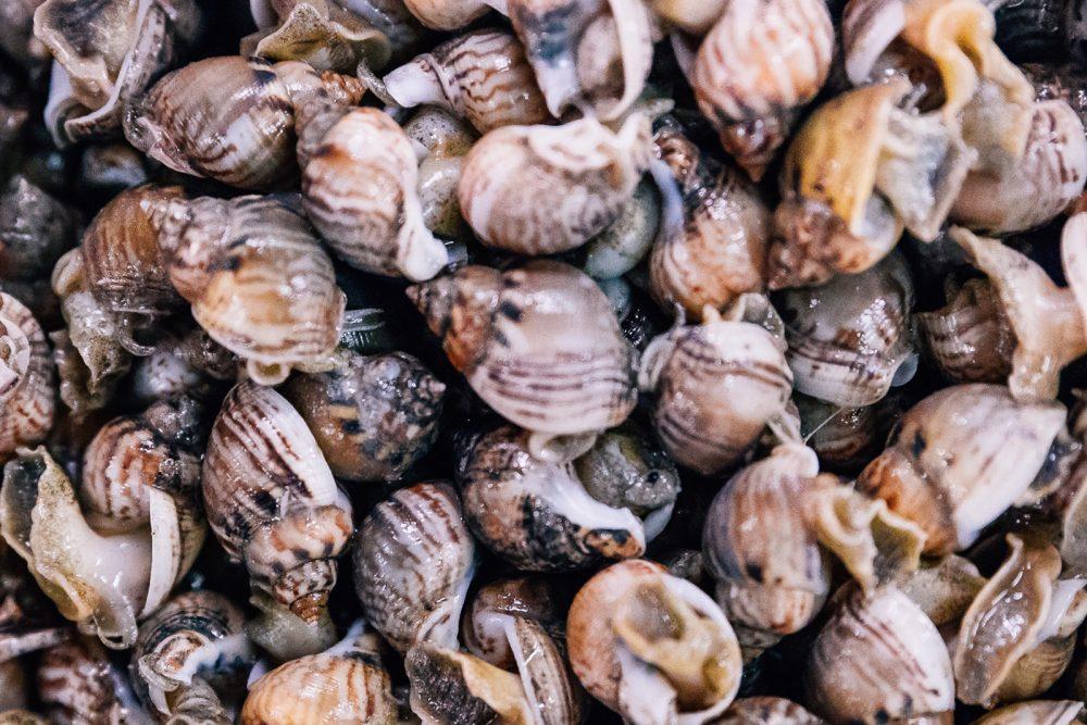 Lumachino | Finittica: lavorazione e vendita di molluschi bivalvi vivi