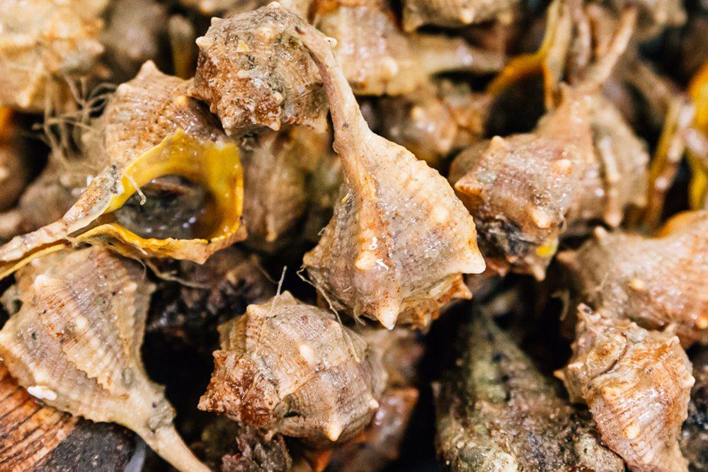 Murice Spinoso | Finittica: lavorazione e vendita di molluschi bivalvi vivi