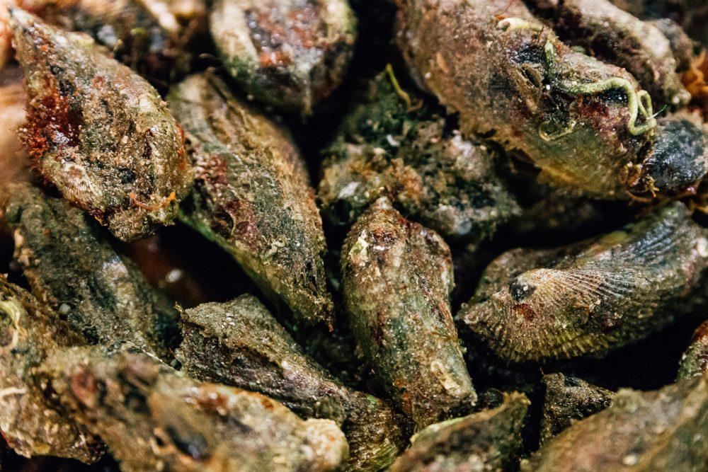 Mussolo | Finittica: lavorazione e vendita di molluschi bivalvi vivi