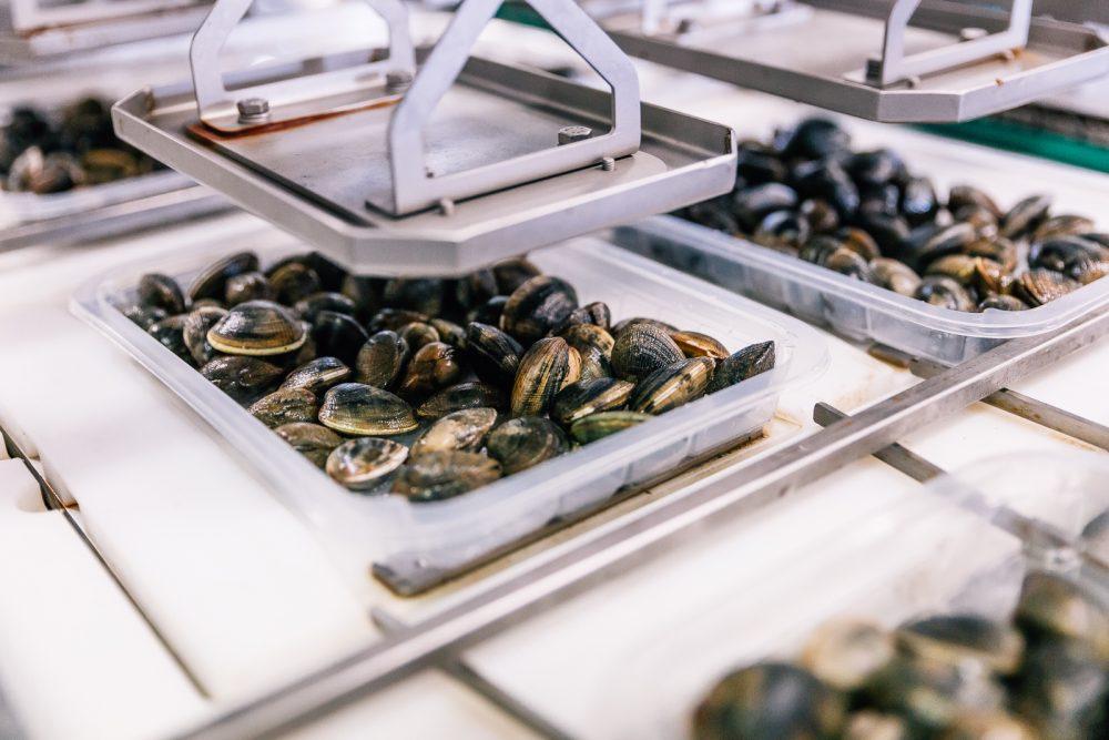 Processo di confezionamento di vongole sottovuoto | Finittica: lavorazione e vendita di molluschi bivalvi vivi