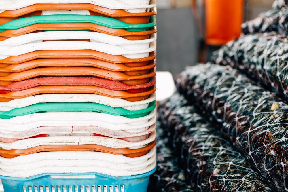 Raccolta cozze a Goro | Finittica: lavorazione e vendita di molluschi bivalvi vivi