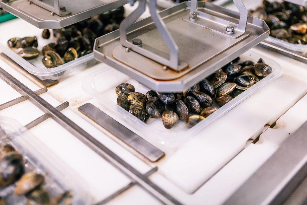 Processo di confezionamento del prodotto | Finittica: lavorazione e vendita di molluschi bivalvi vivi