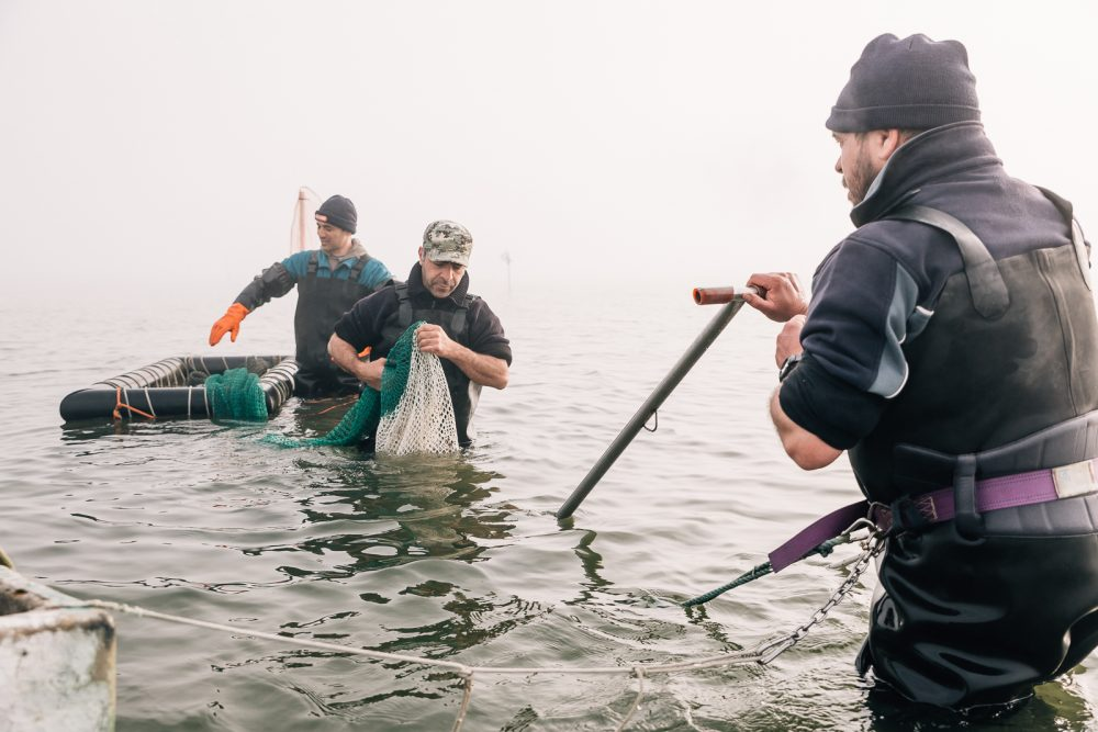 Raccolta vongole a Goro | Finittica: lavorazione e vendita di molluschi bivalvi vivi