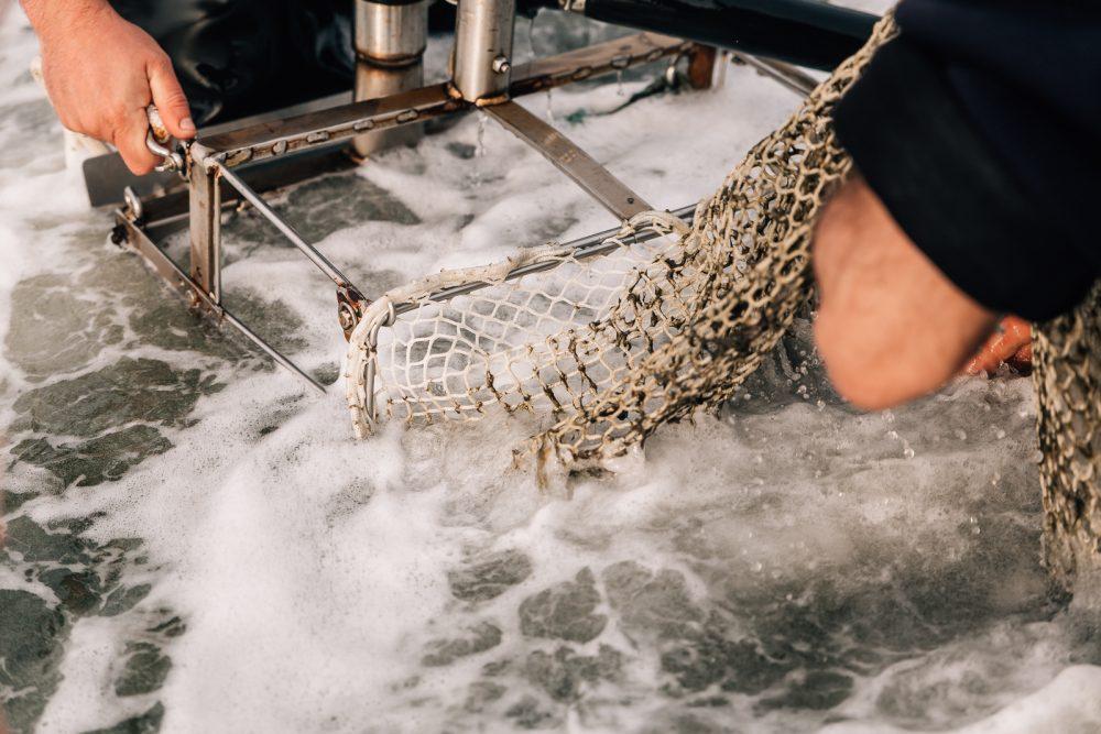 Processo di raccolta di vongole a Goro | Finittica: lavorazione e vendita di molluschi bivalvi vivi