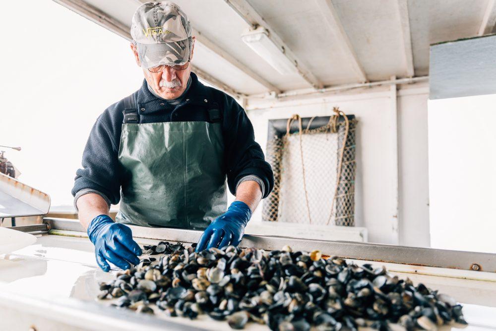 Processo di raccolta e selezione di vongole a Goro | Finittica: lavorazione e vendita di molluschi bivalvi vivi