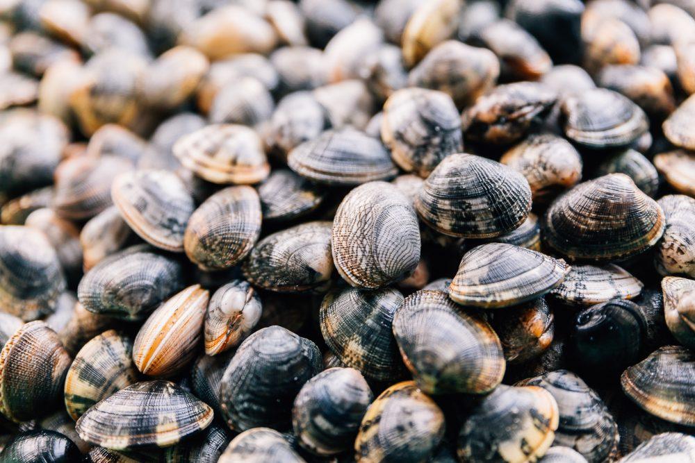 Vongole coltivate e raccolte a Goro | Finittica: lavorazione e vendita di molluschi bivalvi vivi