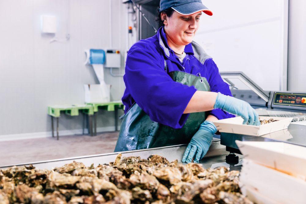 Processo di pulitura e confezionamento di ostriche | Finittica: lavorazione e vendita di molluschi bivalvi vivi