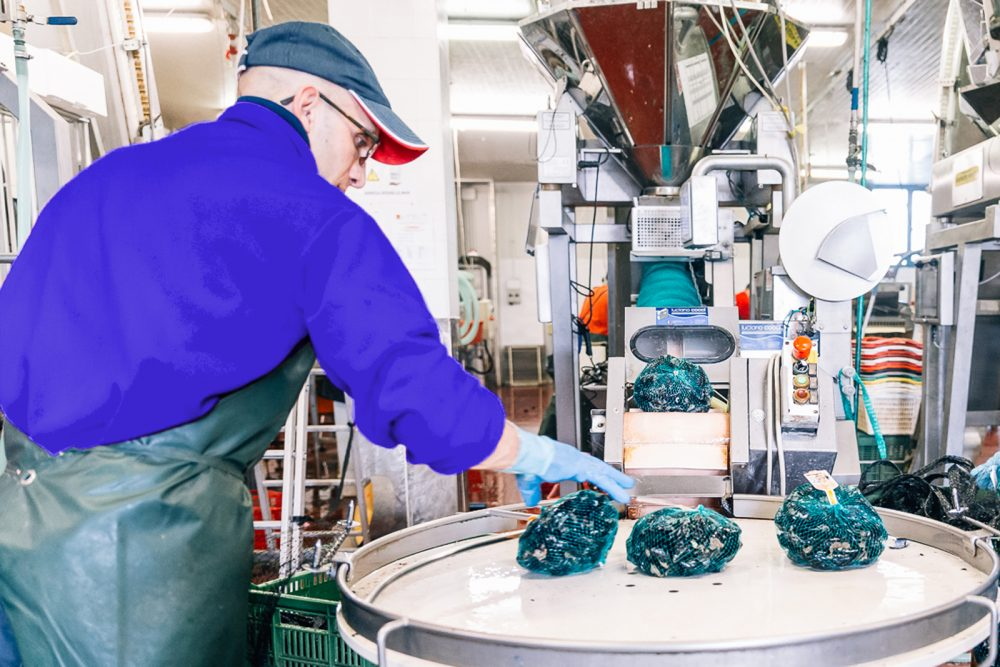 Processo di confezionamento cozze | Finittica: lavorazione e vendita di molluschi bivalvi vivi